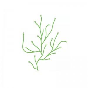 Algue - Vitra